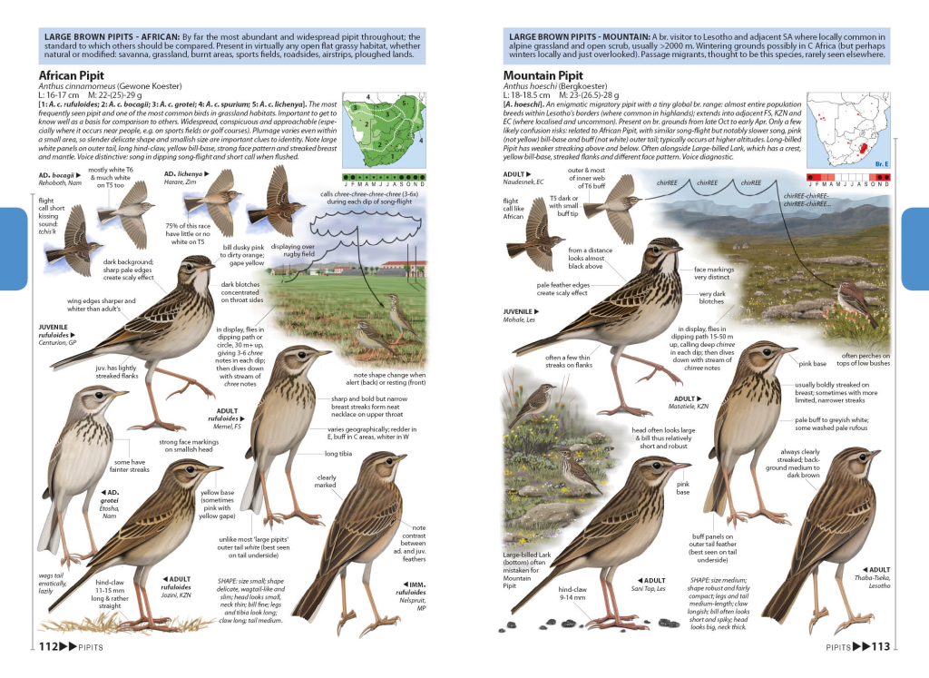 Pipits