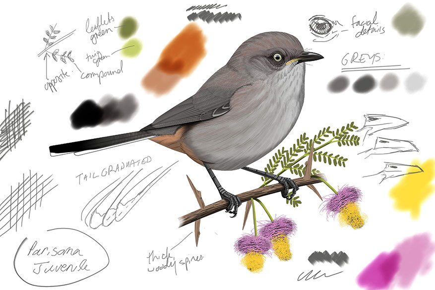 Art of Digitial Bird Painting