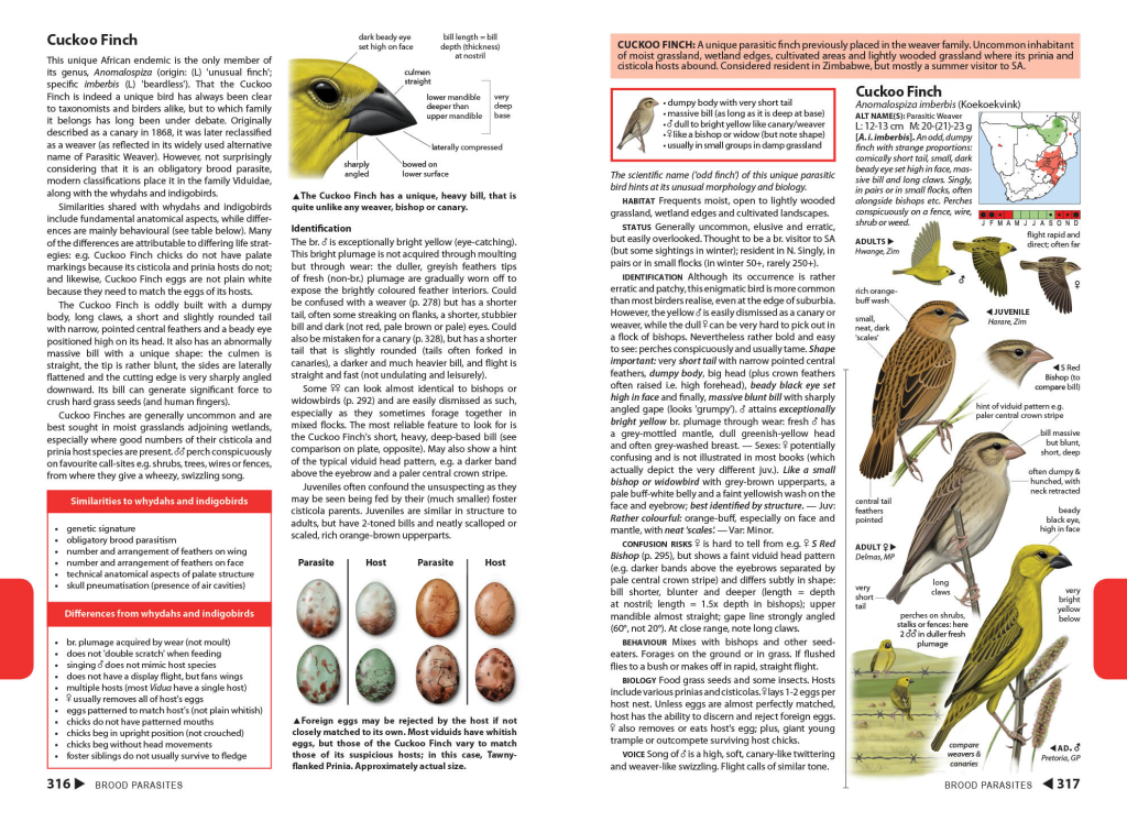 Cuckoo Finch biology