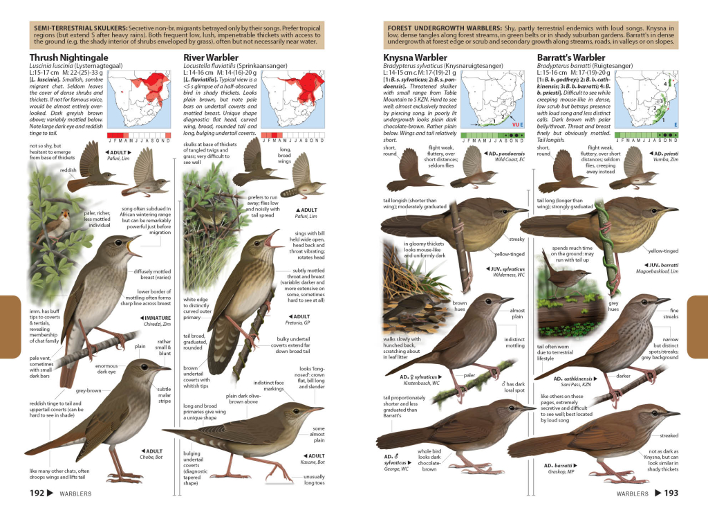 Forest warblers