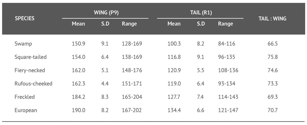 Wing and tail lengths