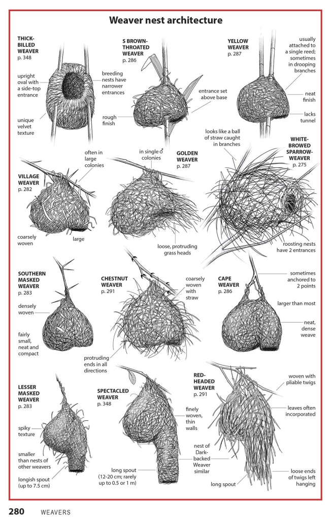 Weaver nests from LBJs book
