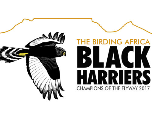 Black Harriers are heading to Israel