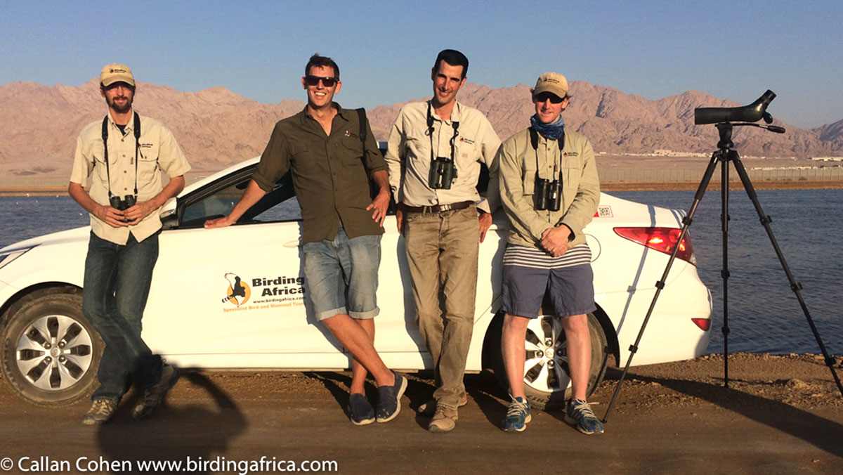 The Birding Africa Black Harriers