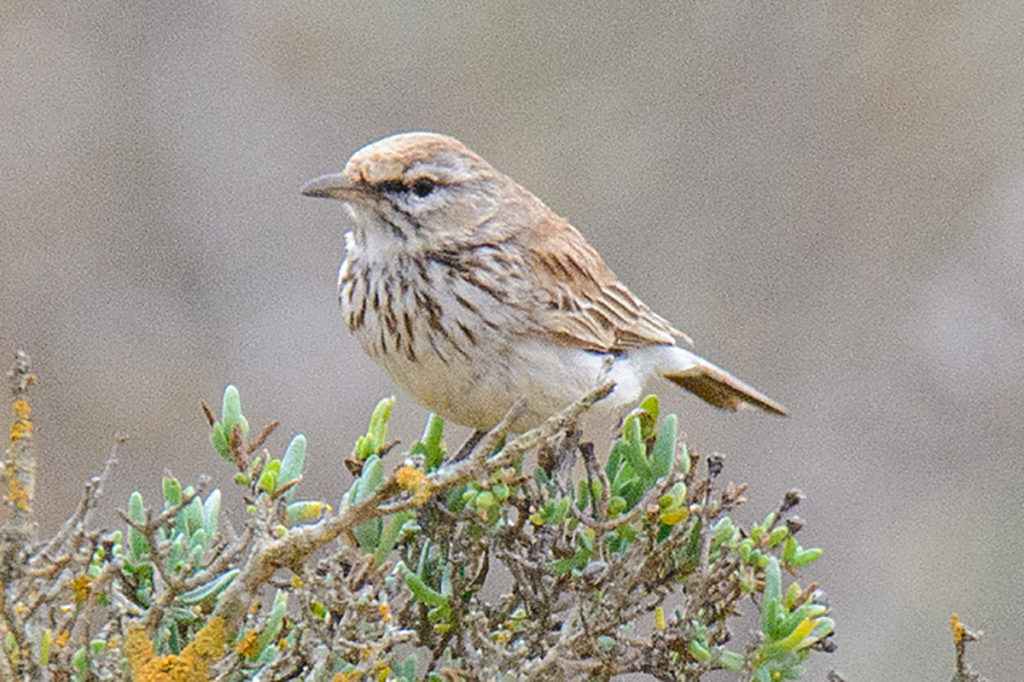 New birds in Southern Africa: A tale of two lists