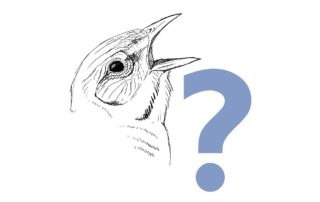 Birdhead_thumbbig