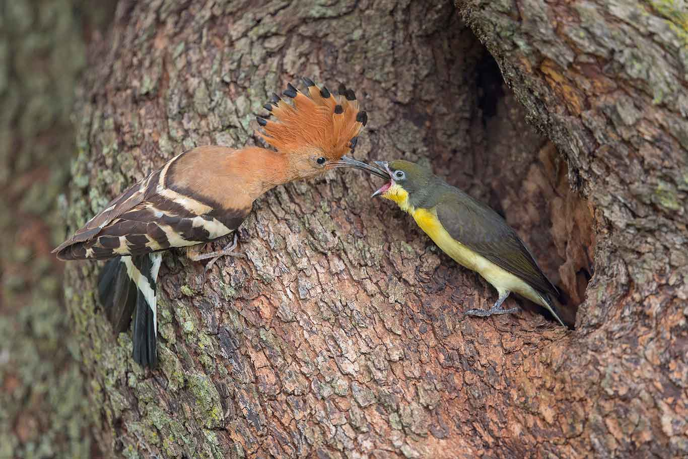 Bird calls for beginners – faansiepeacock com